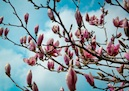 """Blossoming"" by Afiqah Yusuf"