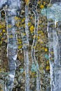 """Lichens and Icicles"" by Mike Shane"