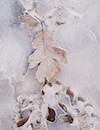"""Winter Embrace 1"" by Lee Musgrave"