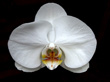 """Orchid"" by Michael McNulty"