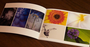 1650 Gallery Flower Power Photography Exhibition Catalog