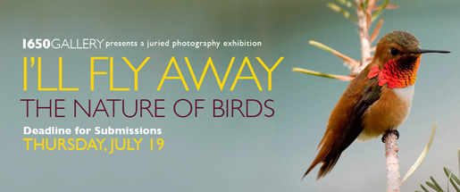 I'll Fly Away: The Nature of Birds Photography Exhibition