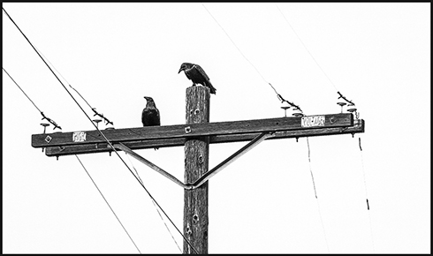 """Focus on the Cross"" by Jennifer Dipper - Birds 2016 Photography Exhibition 1650 Gallery Best of Show"