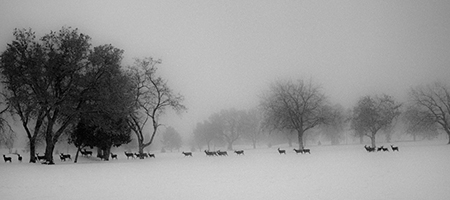 """U of U Deer Park"" by Kip Harris - Snow & Ice 2017 Photography Exhibition 1650 Gallery Best of Show"