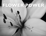 1650 Gallery Flower Power Catalog