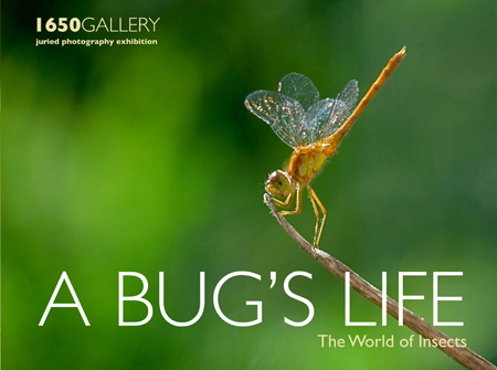 A BUG'S LIFE 2013 Photography Exhibition