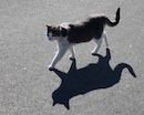 """Cats Shadow"" by Janet Gray"