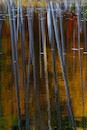 """Autumn Reflection 1"" by James Reeder"