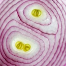 """Red Onion"" by Wayne Chinnock"