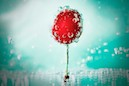 """Bubblin´Cherry"" by Petra Lederer Dembic"