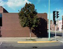 """Tree: Cedar Rapids, Iowa"" by John Puffer"