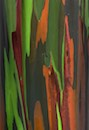 """Rainbow Bark"" by Jim Sinsheimer"