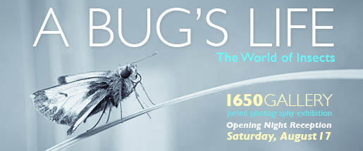 A Bug's Life Photography Exhibition